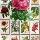 FLOWERS-108 250 vintage print