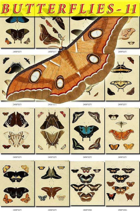 BUTTERFLIES-11 270 vintage print