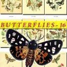 BUTTERFLIES-16-b4 199 vintage print