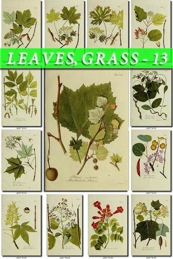 LEAVES GRASS-13 266 vintage print