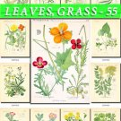 LEAVES GRASS-55 208 vintage print
