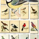 BIRDS-101 108 vintage print