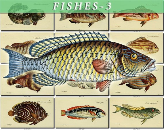 FISHES-3 90 vintage print