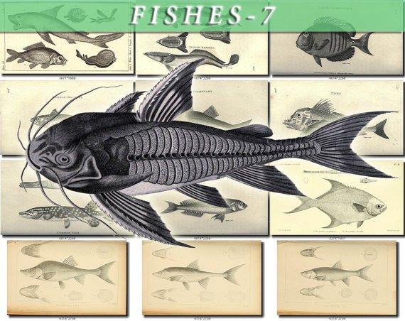 FISHES-7-bw 223 black-, -white vintage print