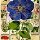 FLOWERS-34 56 vintage print