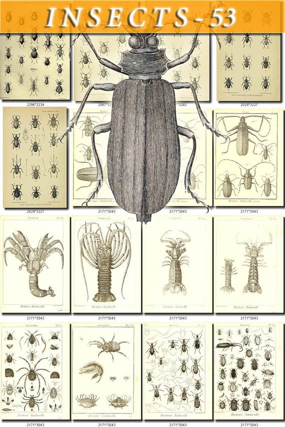 INSECTS-53-bw 241 vintage print