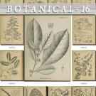 BOTANICAL-16-bw 217 black-, -white vintage print