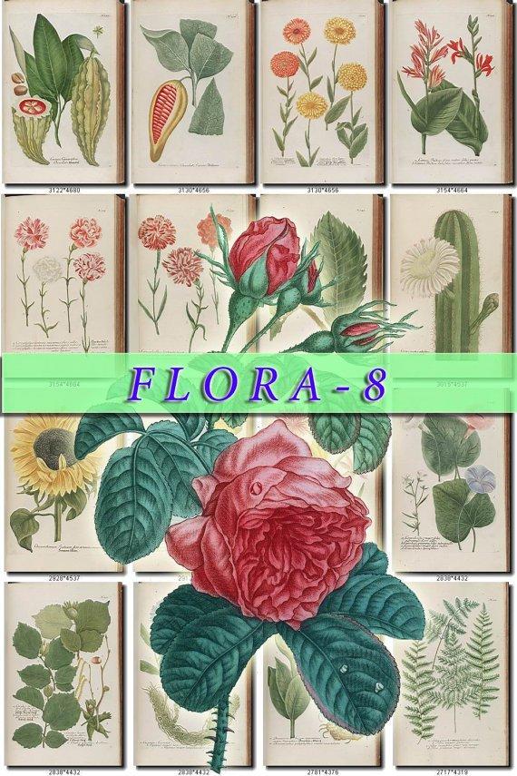 FLORA-8 420 vintage print