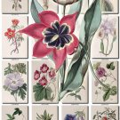 FLOWERS-64 210 vintage print