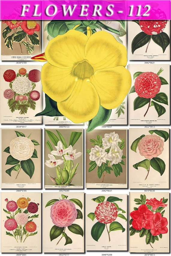 FLOWERS-112 216 vintage print