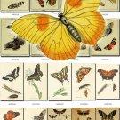 BUTTERFLIES-22 75 vintage print