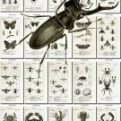 INSECTS-39-bw 178 vintage print
