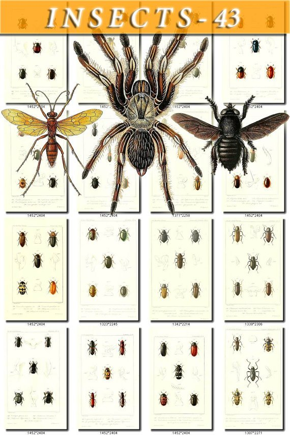 INSECTS-43 96 vintage print