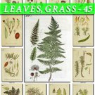 LEAVES GRASS-45 192 vintage print