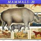 MAMMALS-20 178 vintage print