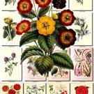 FLOWERS-49 61 vintage print