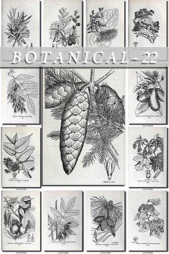 BOTANICAL-22-bw 127 black-, -white vintage print