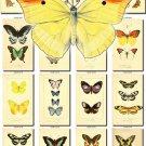BUTTERFLIES-47 243 vintage print