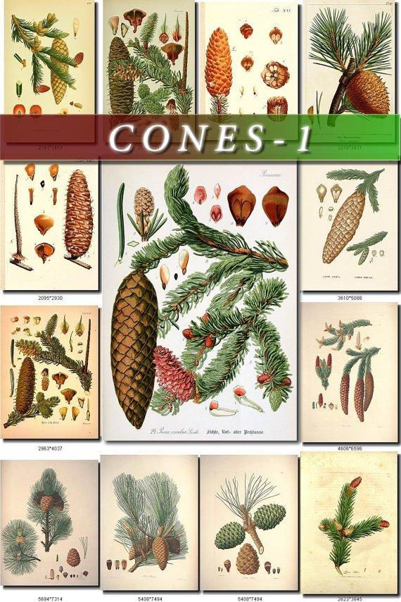 CONES-1 170 vintage print