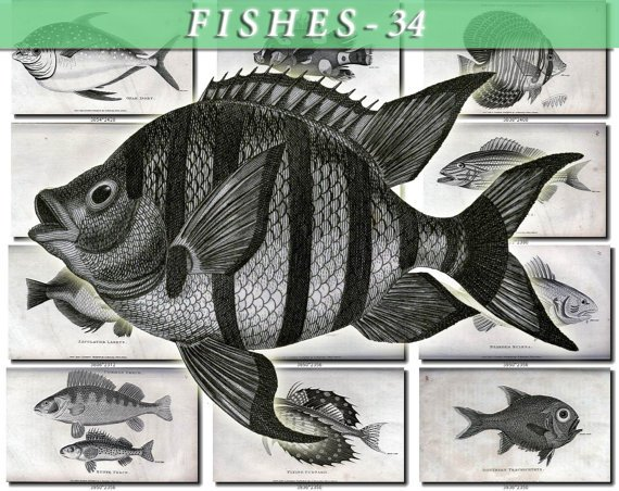 FISHES-34-bw 91 vintage print