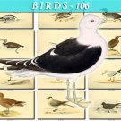 BIRDS-106 107 vintage print