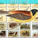 BIRDS-119 60 vintage print