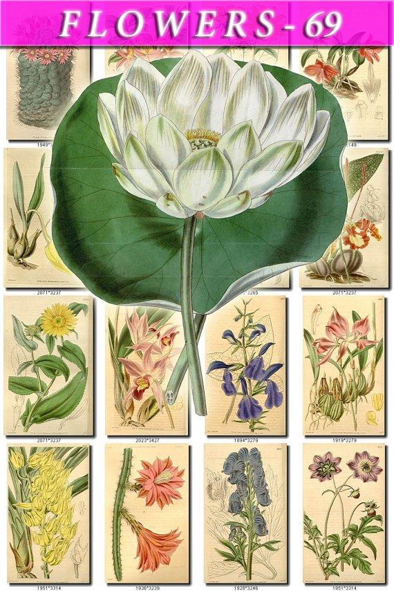FLOWERS-69 254 vintage print