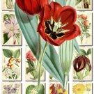 FLOWERS-79 261 vintage print