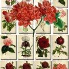 FLOWERS-103 304 vintage print