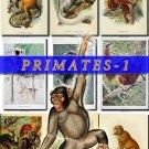 PRIMATES APES-1 52 vintage print