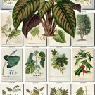 LEAVES GRASS-72 339 vintage print
