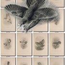 BIRDS-26-bw 229 black-, -white vintage print