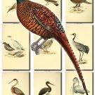 BIRDS-103 57 vintage print