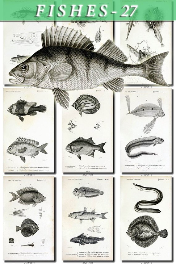 FISHES-27-bw 109 vintage print