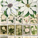 WHITE-6 FLOWERS 254 vintage print