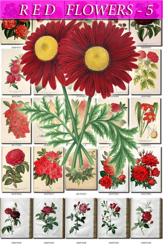 RED-5 FLOWERS 225 vintage print