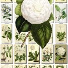 WHITE-5 FLOWERS 235 vintage print
