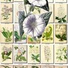 WHITE-1 FLOWERS 200 vintage print