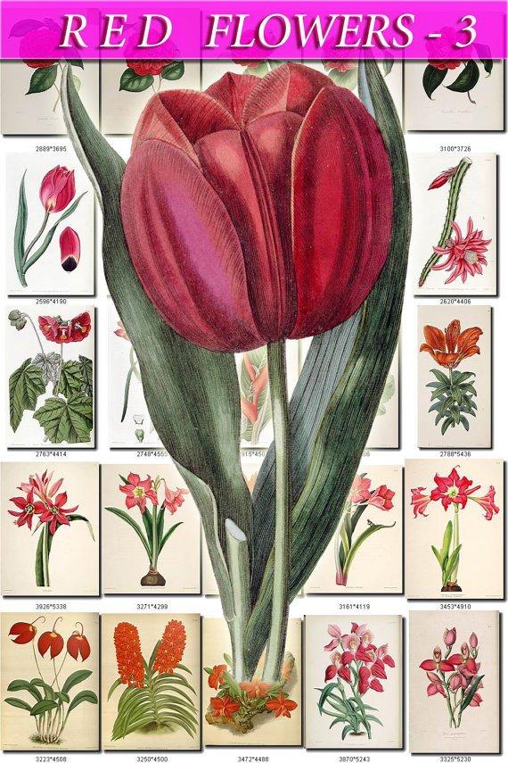 RED-3 FLOWERS 210 vintage print