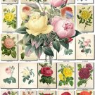 ROSES-5 155 beautiful vintage print
