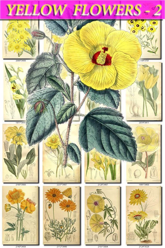 YELLOW-2 FLOWERS 280 vintage print