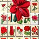 RED-1 FLOWERS 260 vintage print