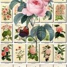 PINK-4 FLOWERS 240 vintage print