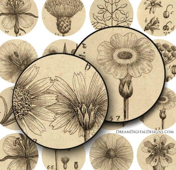 Botanical 1 inch Circles, Collage Sheet, Vintage Floral, Digital Botanical