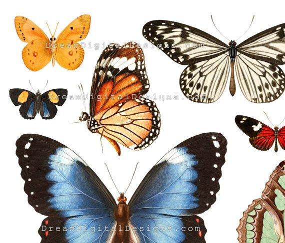 Butterflies Digital Collage Sheet, Butterfly, Vintage Illustrations
