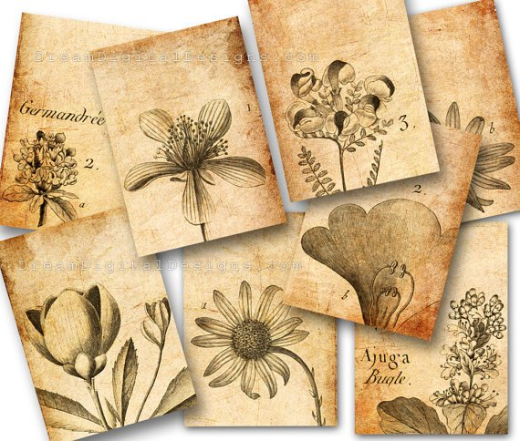 Botanical Drawings, Collage Sheet, Tags, ACEO, Vintage Images, Aged Paper