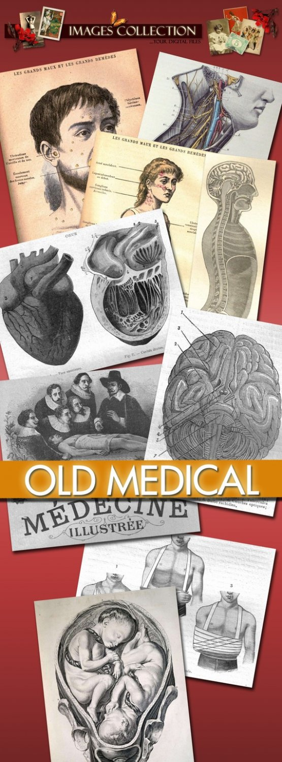 Digital Img. Old Medical Illustration anatomical