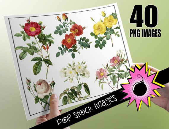 Roses 40 Roses Digital Img.-Digital Img. for Altered ArtDigital Scrapbooking-print Roses Img.