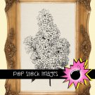 Lilac Bloom Digital Image Transfer-Lilac print for TotesLinens Shirts print Lilac Illustration