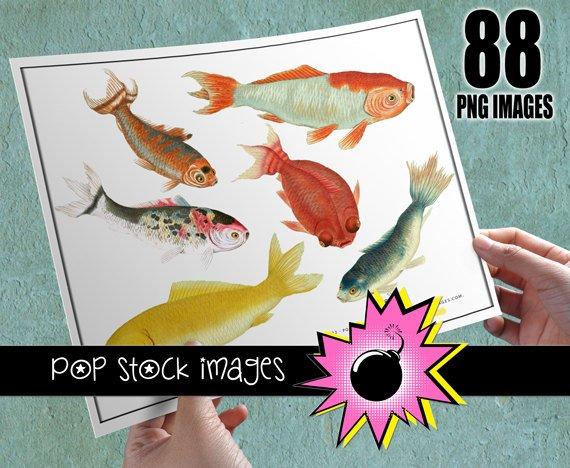 Koi Fish Digital Image Collection-Goldfish & Koi Digital Img.-Digital Scrapbooking Koi Img.-